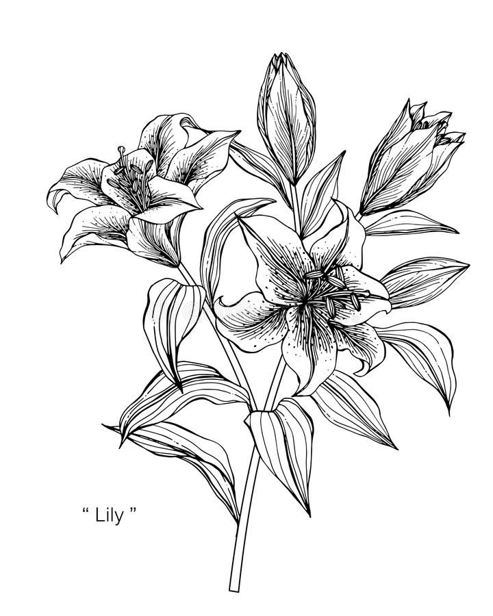 Lily flower drawing illustration black and white with line art download lily flower drawing illustration black and white with line art stock illustration mightylinksfo