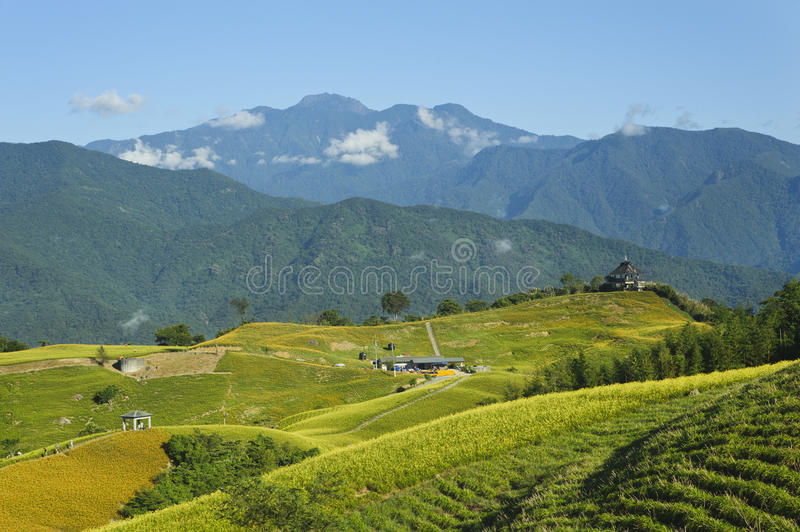 Lily flower garden with beautiful mountain scenery