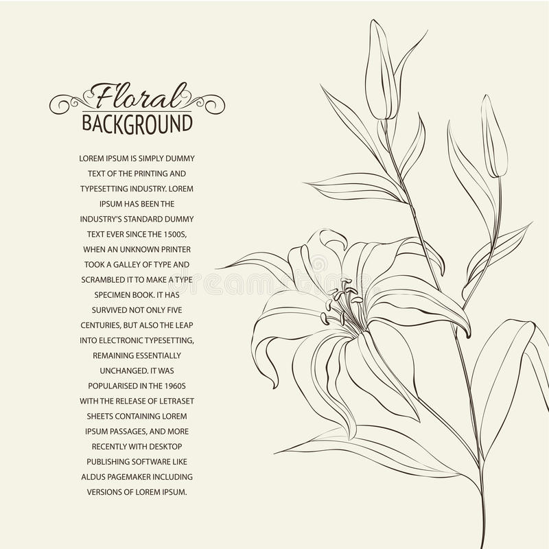 Download Lily Flower Isolated Over White. Stock Vector - Illustration of brochure, drawing: 30744258