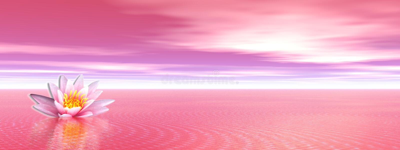 Lily flower in pink ocean stock illustration