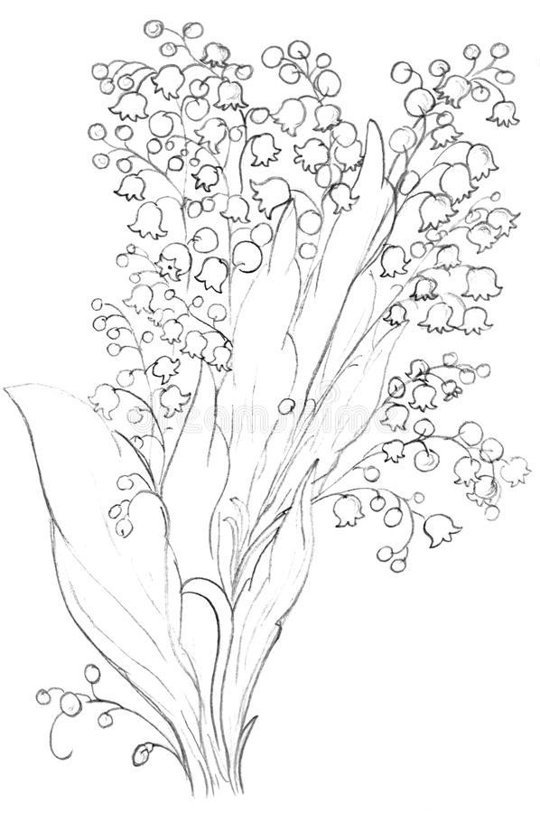 Download Lily Flowers Sketch, Drawing Royalty Free Stock Photos - Image: 12960248