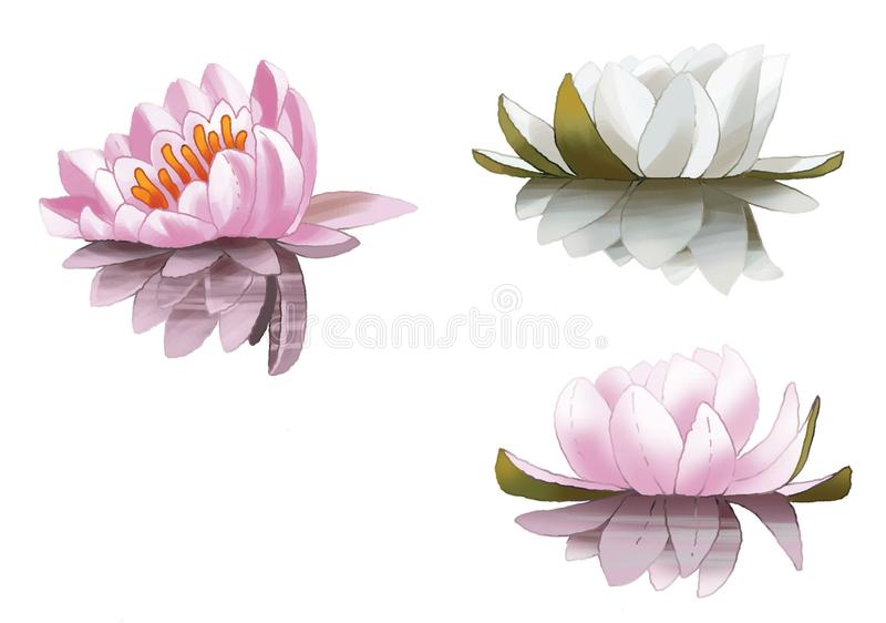 Lily lake swamp beauty, the tenderness, the grace, the tale of a flower plant royalty free stock photography