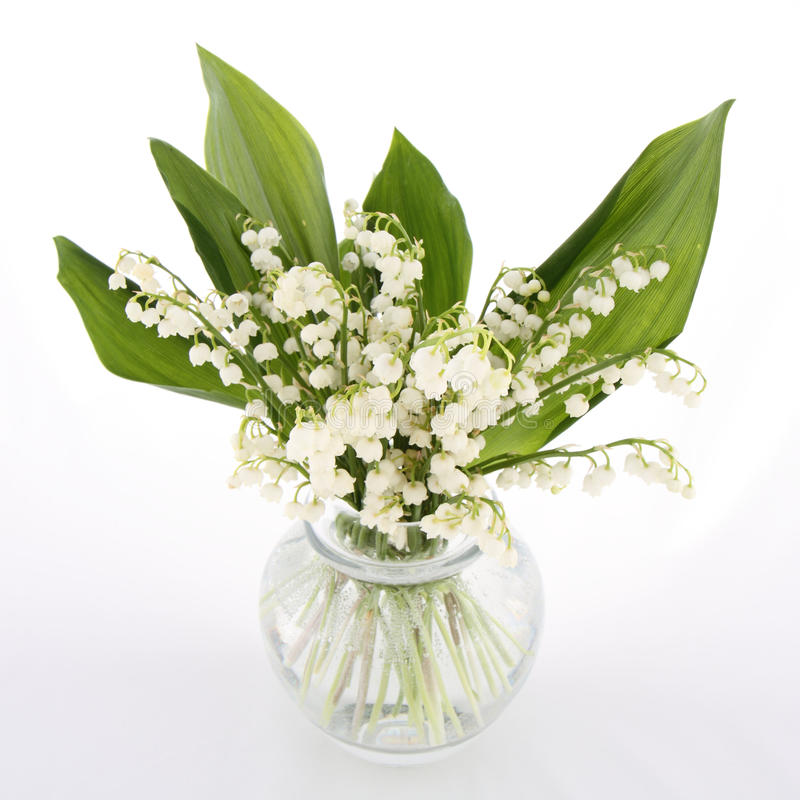 Free Lily Of The Valley Stock Images - 19703884