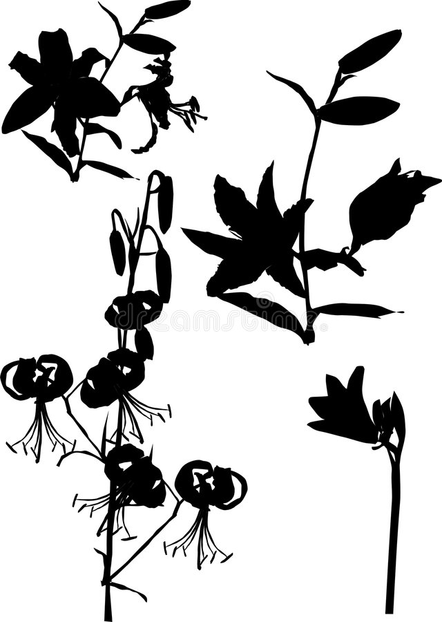 Download Lily Ornamental Silhouette Royalty Free Stock Photos - Image: 3464658