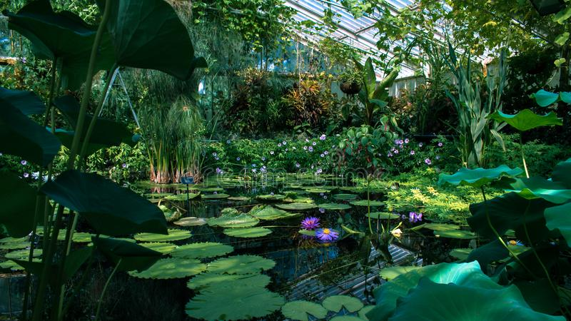 Lily Pad Green House fotografie stock