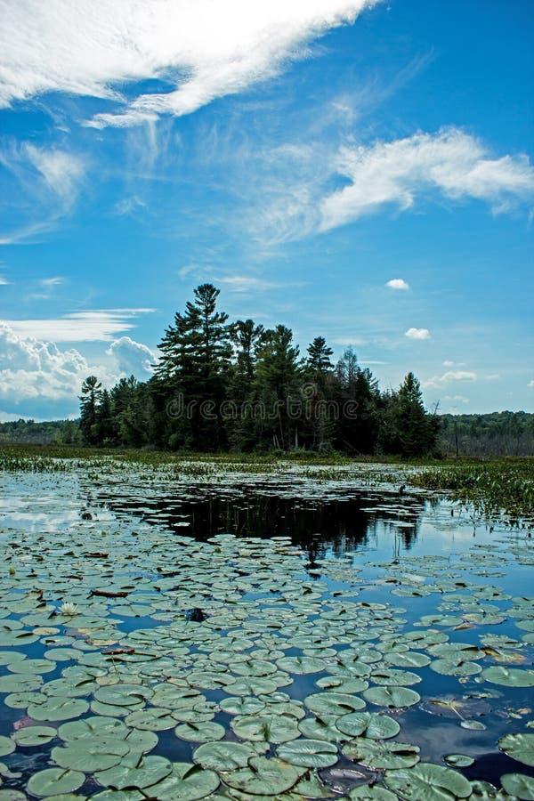 Lily Pads Lead To uma península coberta nos pinheiros fotos de stock royalty free