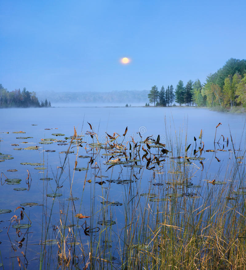 Download Lily Pads And Moon stock image. Image of peninsula, pads - 18808015