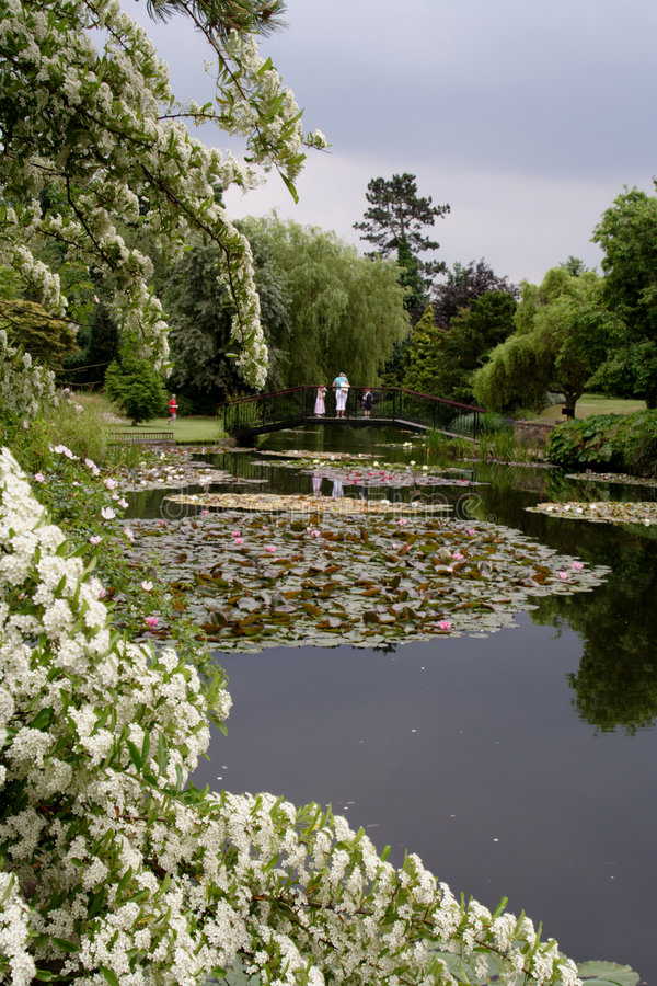Lily Pond Burnby Hall stock photos