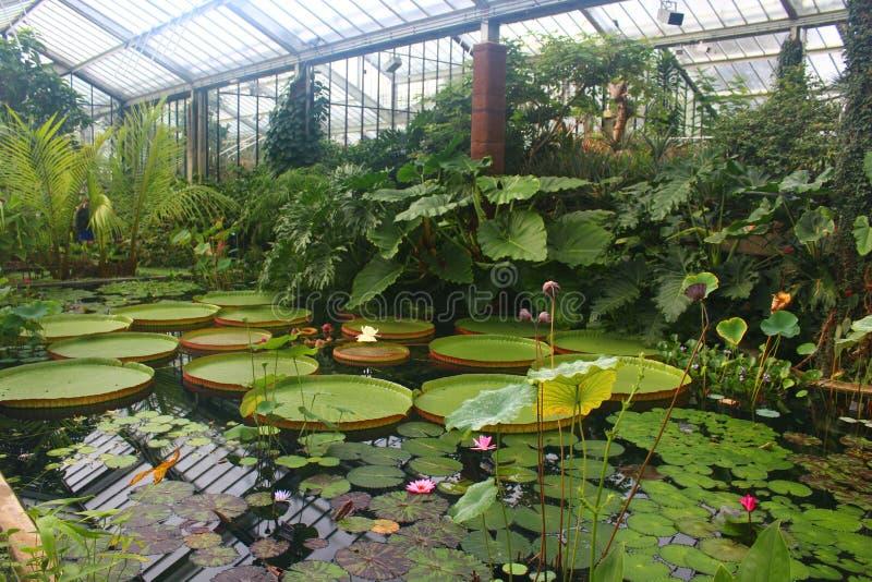 Lily Pond dentro de la princesa Diana Conservatory en los jardines botánicos de Kew foto de archivo