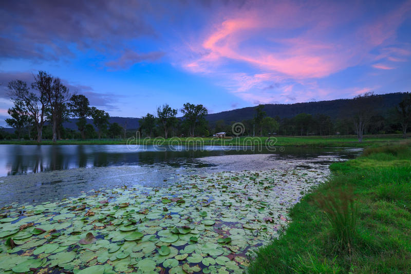 Download Lily Pond At Twilight Stock Photos - Image: 25487663