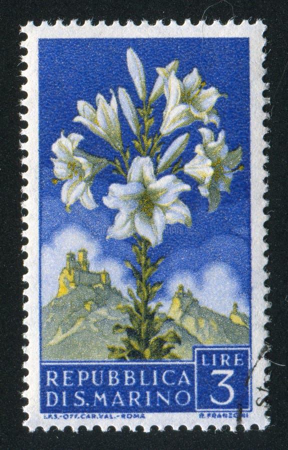 Lily imagem de stock