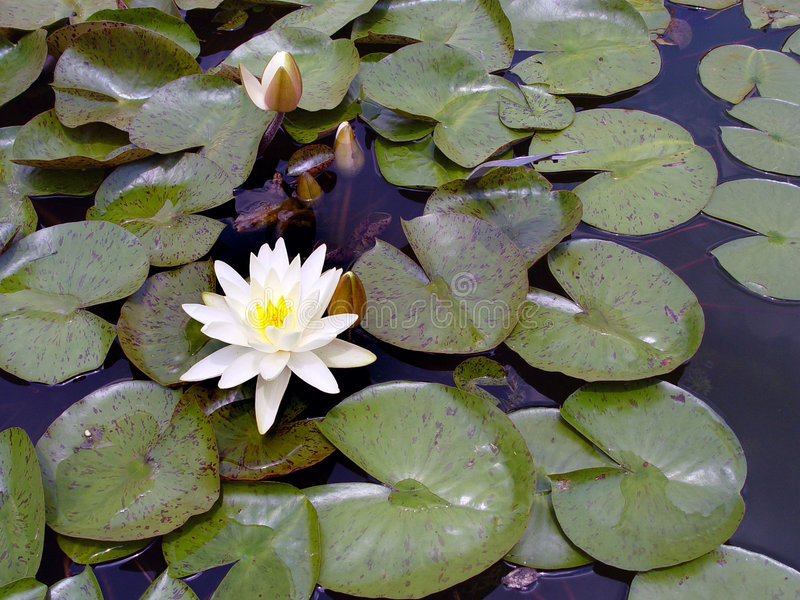 lily staw zdjęcie royalty free