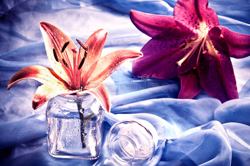 Download Lily still-life stock photo. Image of blue, flower, still - 14039444