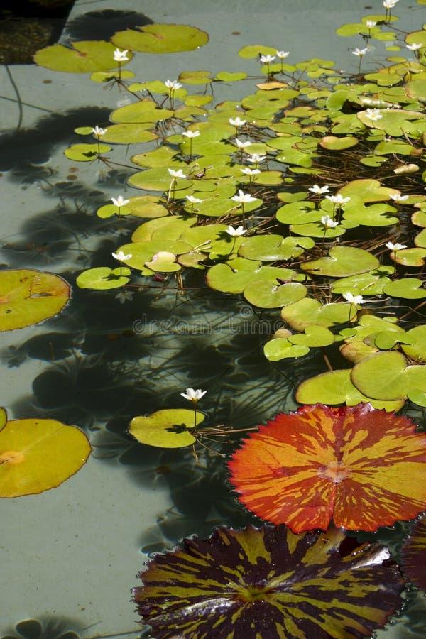 lily strażników fotografia stock