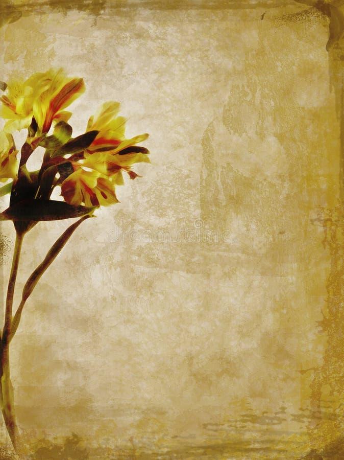 lily textured żółty obrazy stock