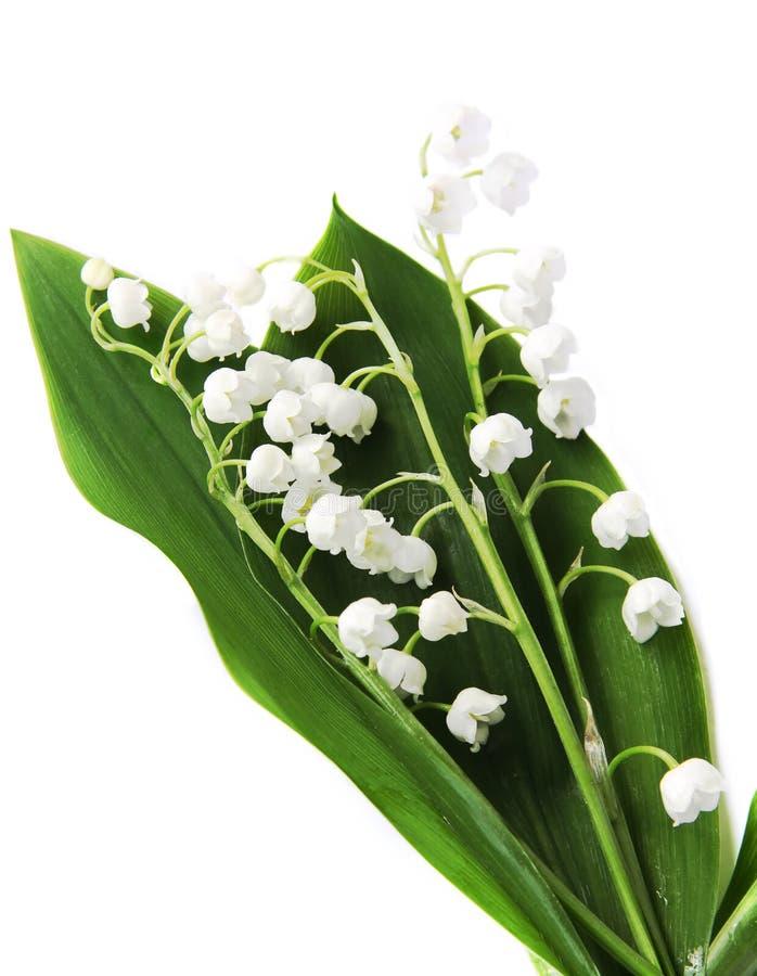Lily-of-the-valley über Weiß lizenzfreie stockbilder