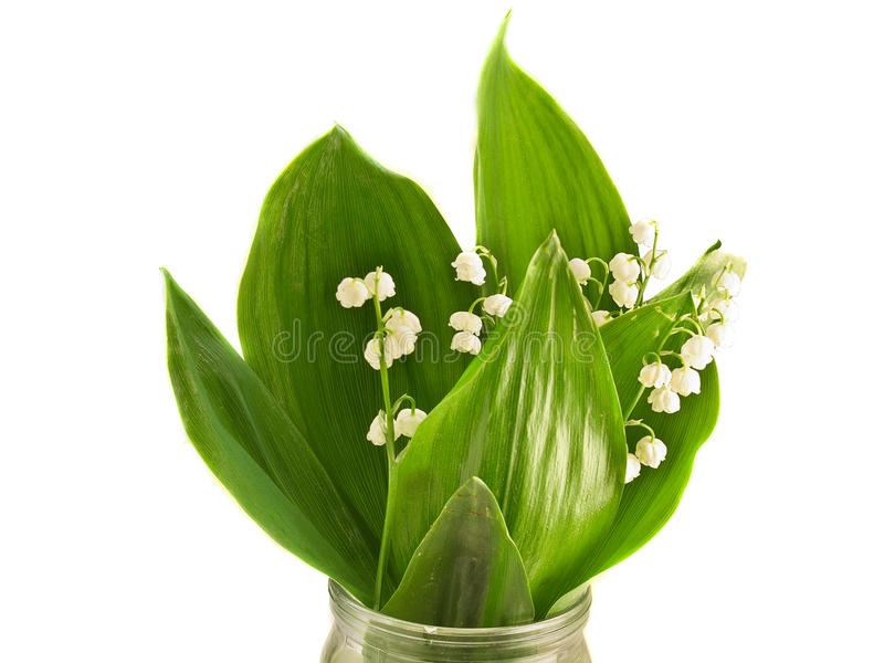 Download Lily of the valley stock image. Image of tender, fragil - 19731275