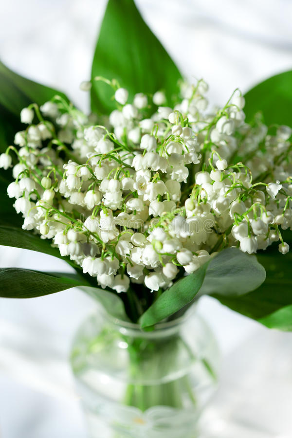 Download Lily of the valley stock image. Image of valentine, leaves - 23105793