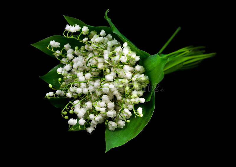 Download Lily of the valley stock photo. Image of background, valentine - 23105802