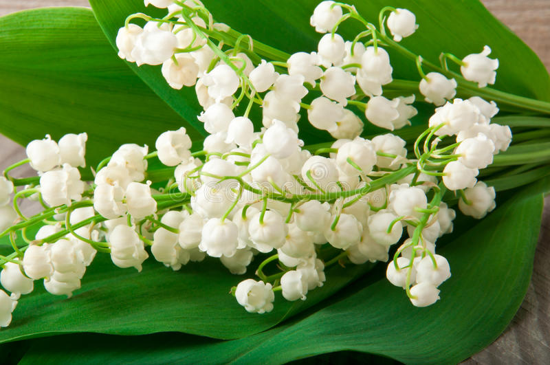 Lily-of-the-valley fotografia de stock