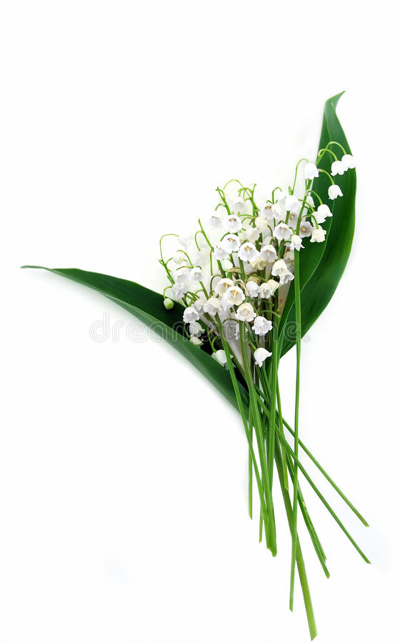 Download Lily of the Valley stock photo. Image of plant, bell, lily - 9820098