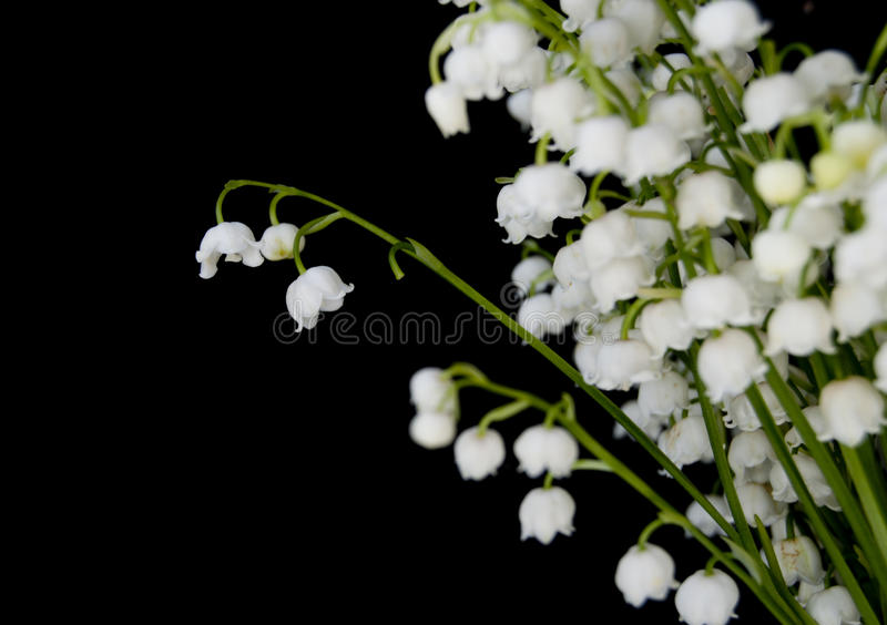 Download Lily-of-the-valley Stock Photo - Image: 31340770