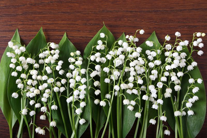 Lily of the valley. stock photography