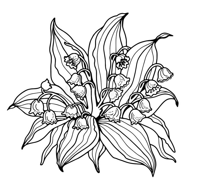 Lily-of-the-valley. Coloring for adults. The line is black. Black line on a white background. Floral pattern. Background stock illustration