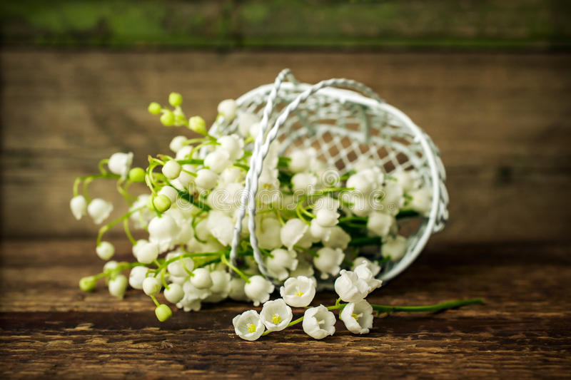 Lily of the valley in a decorative basket. On wooden background royalty free stock images