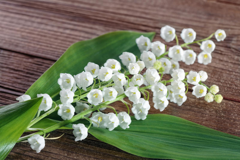 Download Lily Of The Valley Royalty Free Stock Photos - Image: 31085768