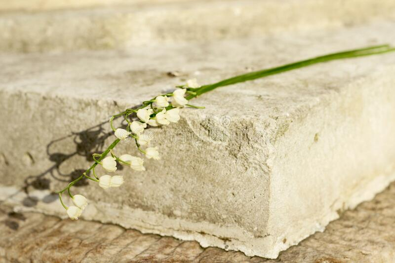 Lily of the valley in the sunlight on a concrete pedestal. royalty free stock photo