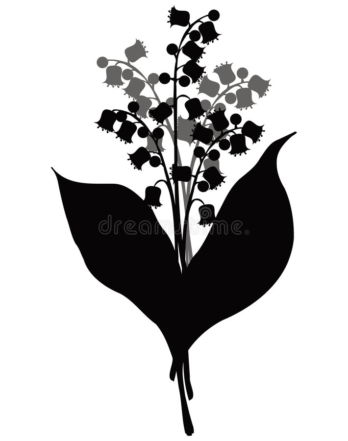 Lily of the valley, vector vector illustration