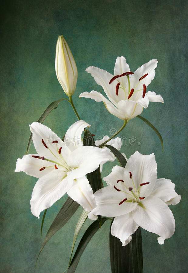 Download Lily Royalty Free Stock Photo - Image: 32724665