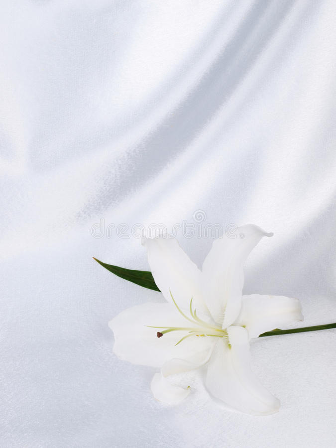 Lily on a white silk royalty free stock images