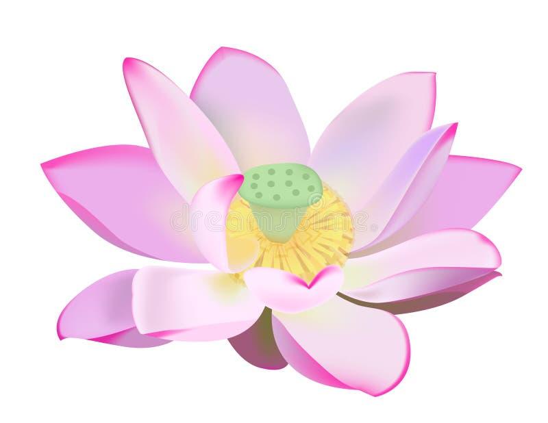 lily wody ilustracja wektor