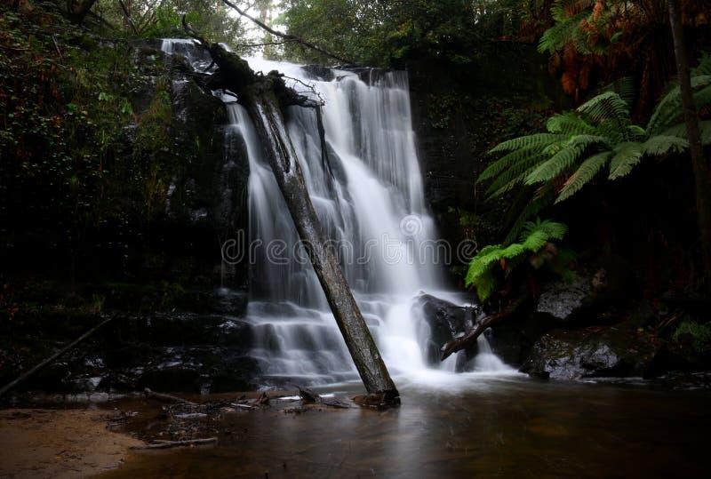 Lilydale-Fall - Tasmanien lizenzfreies stockbild