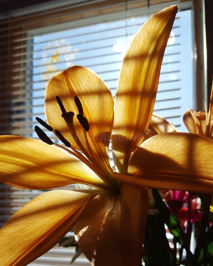 Lilyflower obraz stock