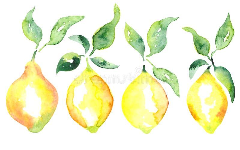 Limão do fruto da aquarela e grupo verde das folhas ilustração stock