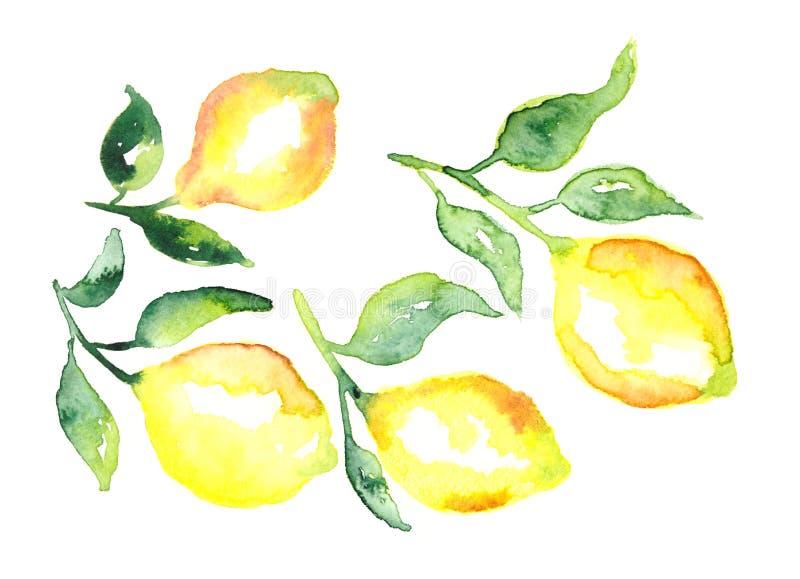 Limão do fruto da aquarela e grupo verde das folhas ilustração do vetor