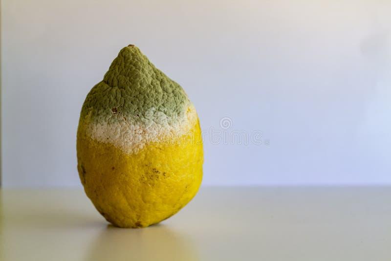 Limão estragado com molde foto de stock