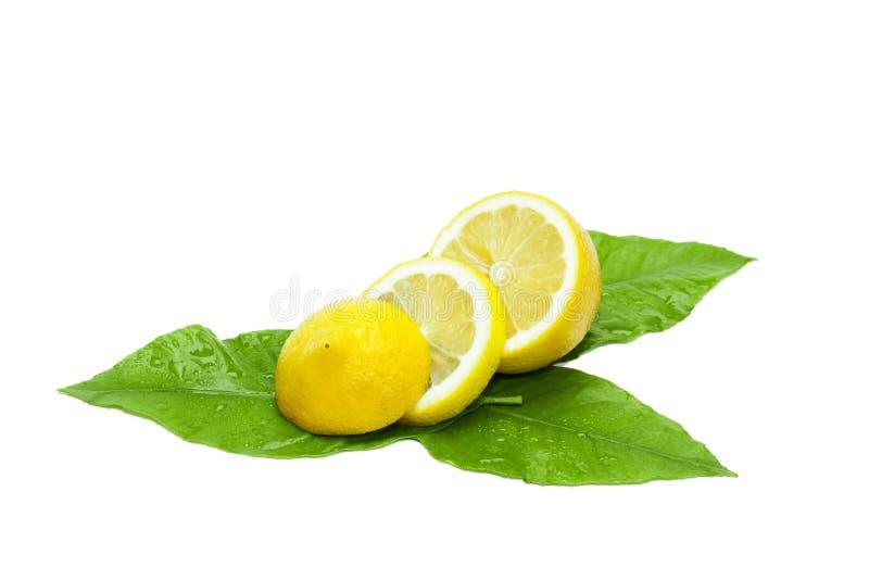 Limão fresco cortado nas folhas verdes fotos de stock royalty free