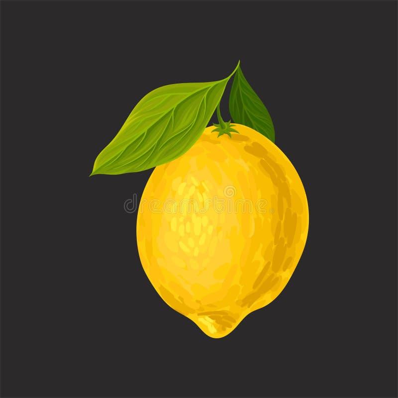 Limão fresco inteiro, ilustração ácida do vetor dos citrinos em um fundo preto ilustração stock