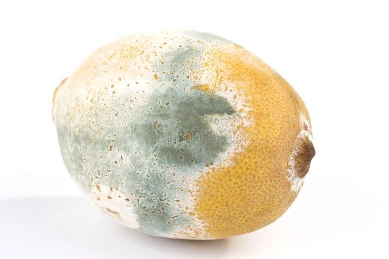 Limão Mouldy foto de stock