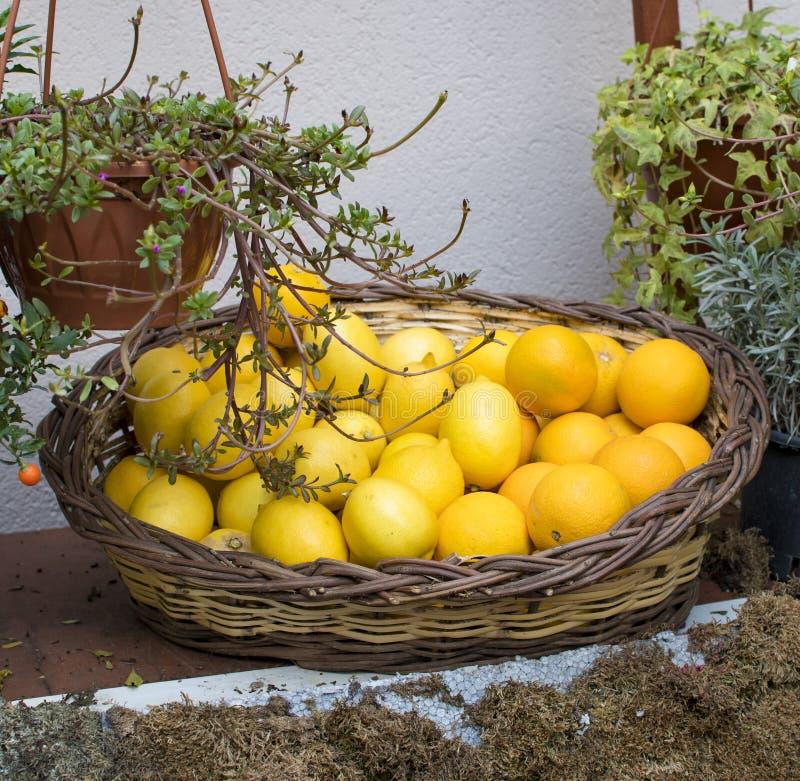 limão na cesta foto de stock