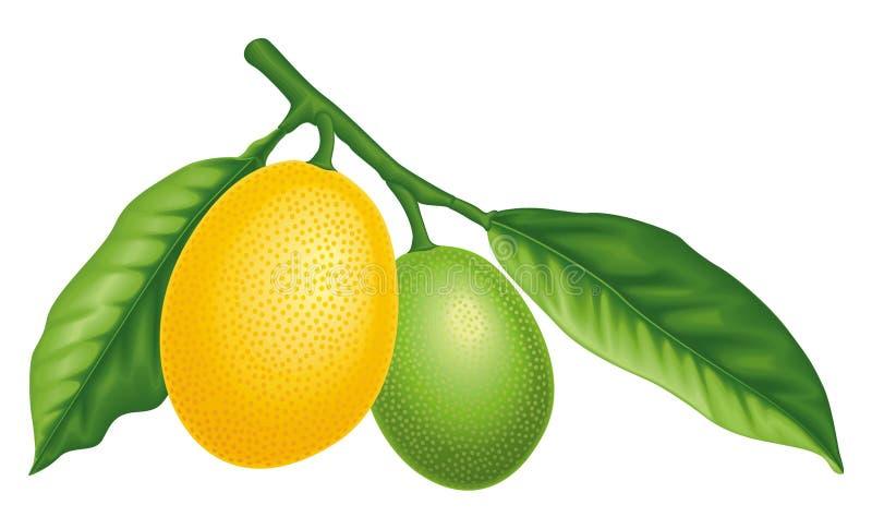 Limón libre illustration