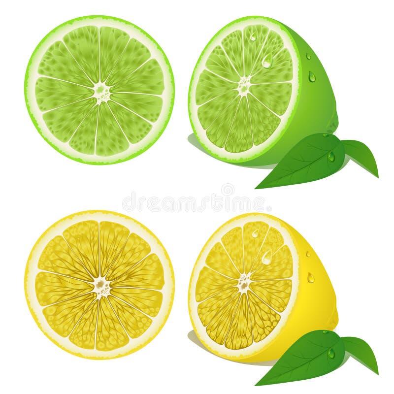 Limón ilustración del vector