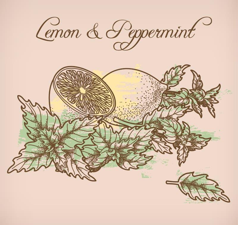Limón e hierbabuena ilustración del vector