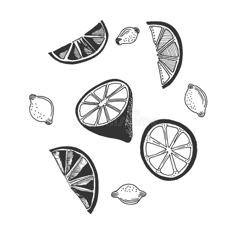 Limón en el estilo del bosquejo, ejemplo del vector stock de ilustración