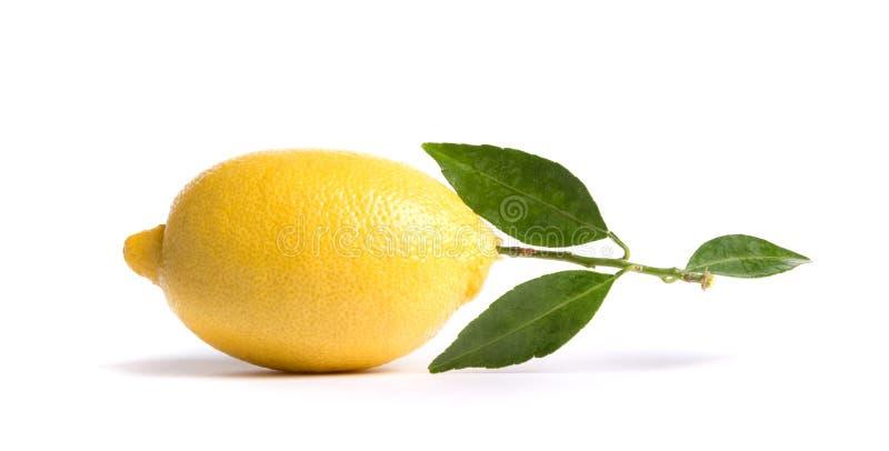 Limón maduro fotos de archivo libres de regalías
