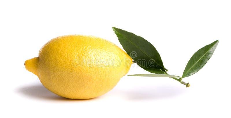 Limón maduro fotos de archivo